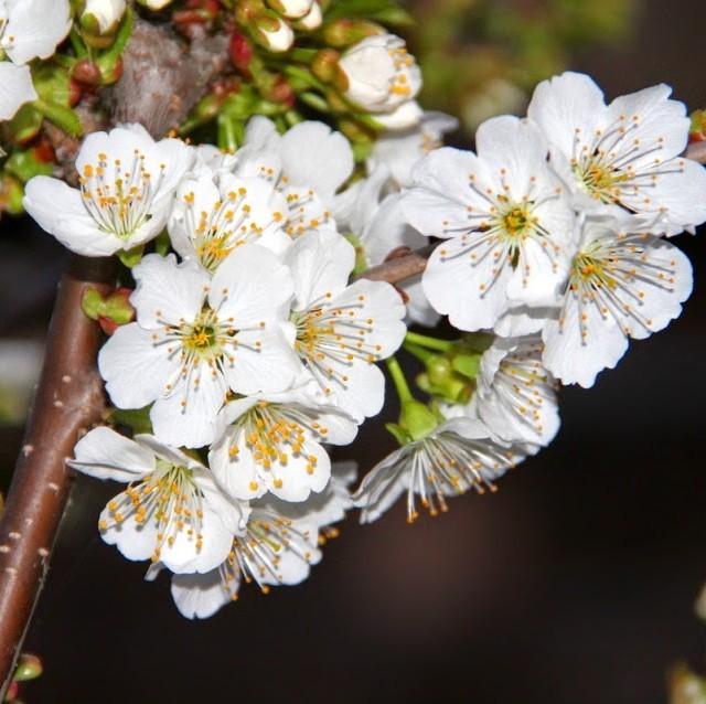 Primăvara